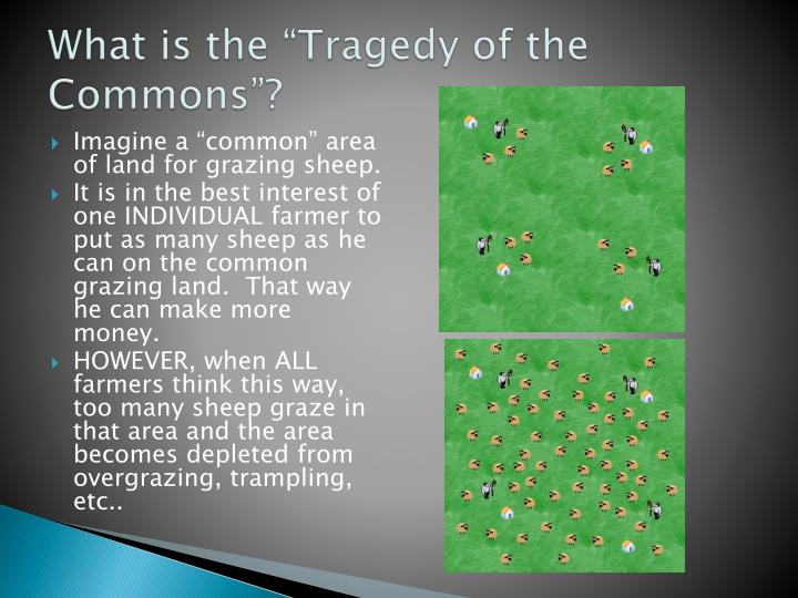 """What is the """"Tragedy of the Commons""""?"""