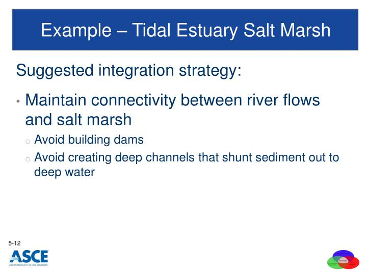Example – Tidal Estuary Salt Marsh
