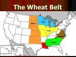 the wheat belt