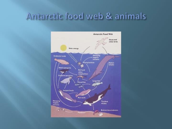 Antarctic food web & animals