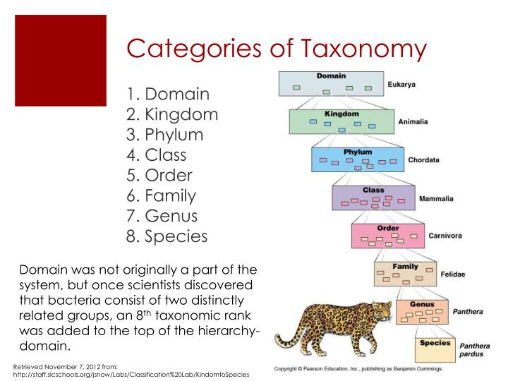 Categories of Taxonomy