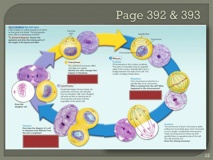 Page 392 & 393