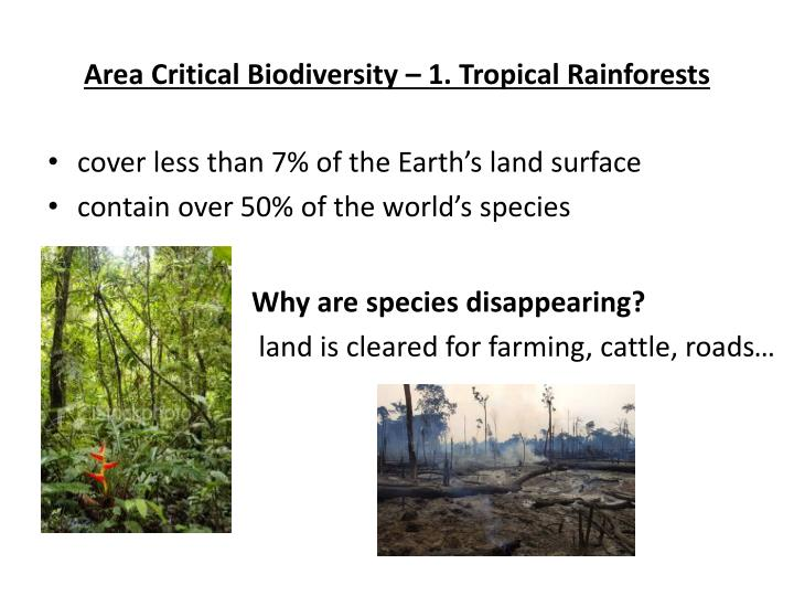 Area Critical Biodiversity – 1. Tropical Rainforests