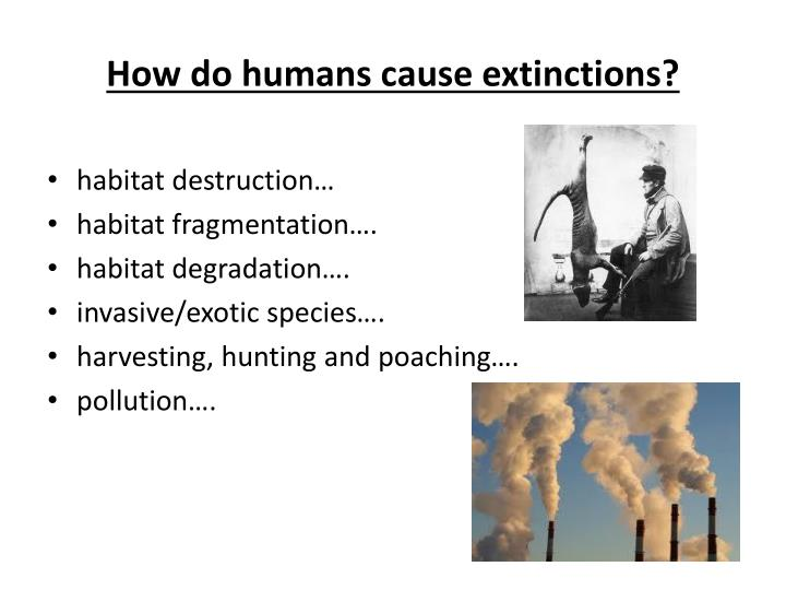 How do humans cause extinctions?
