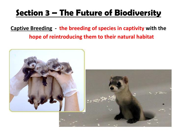 Section 3 – The Future of Biodiversity
