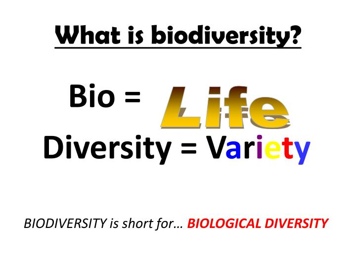 What is biodiversity