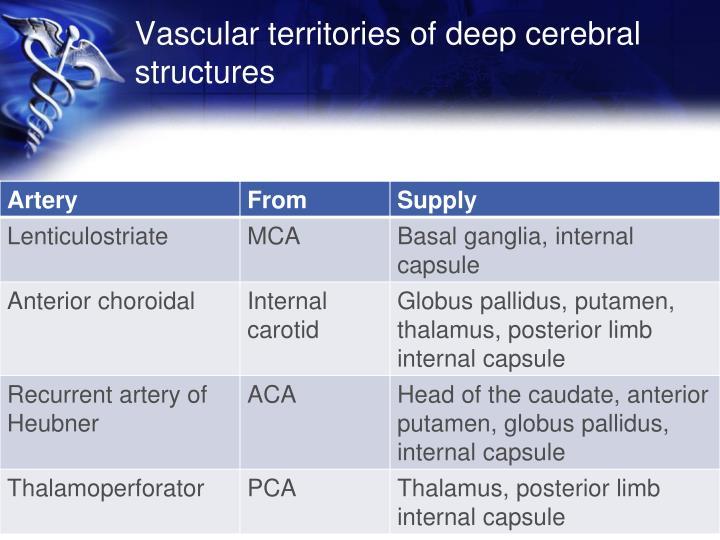 Vascular territories of deep cerebral structures