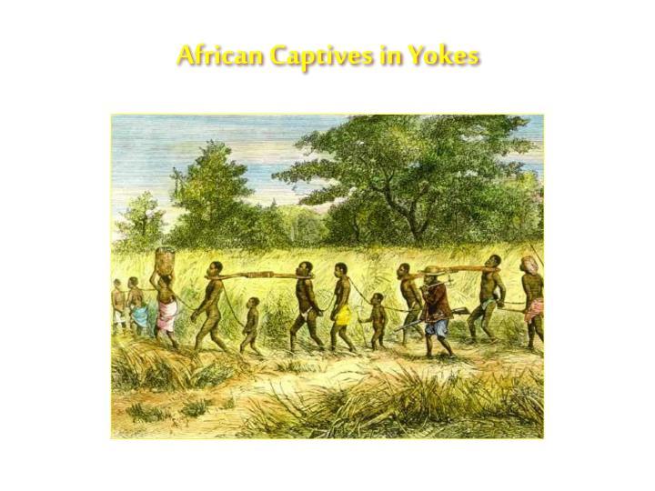 African Captives in Yokes