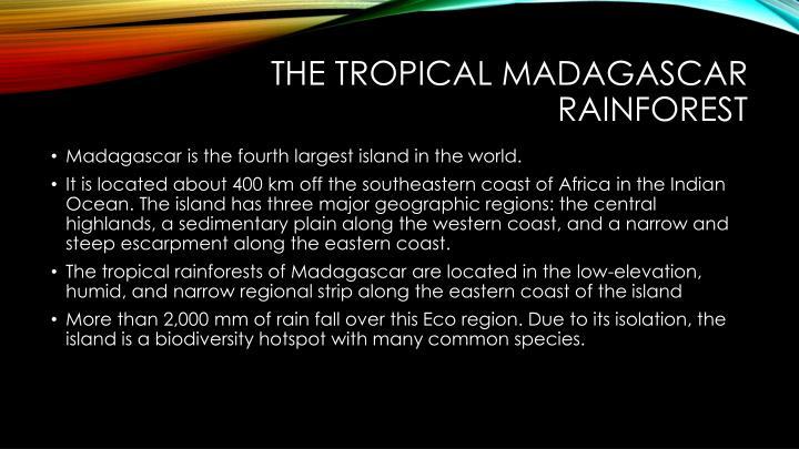 The Tropical Madagascar Rainforest