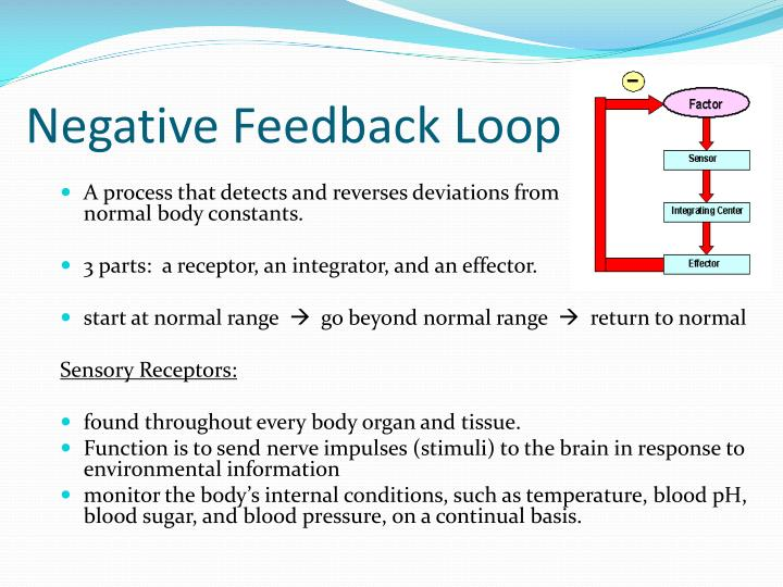 Negative Feedback Loop