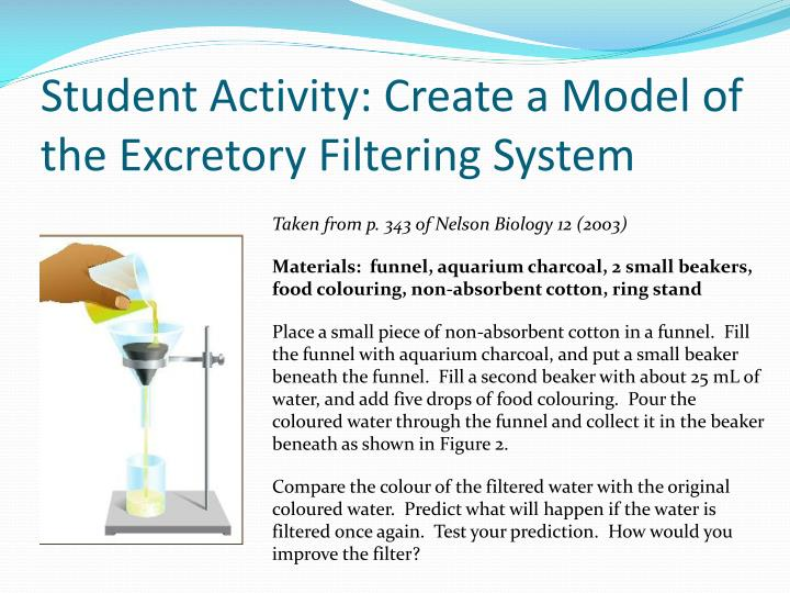 Student Activity: Create a Model of the Excretory Filtering System