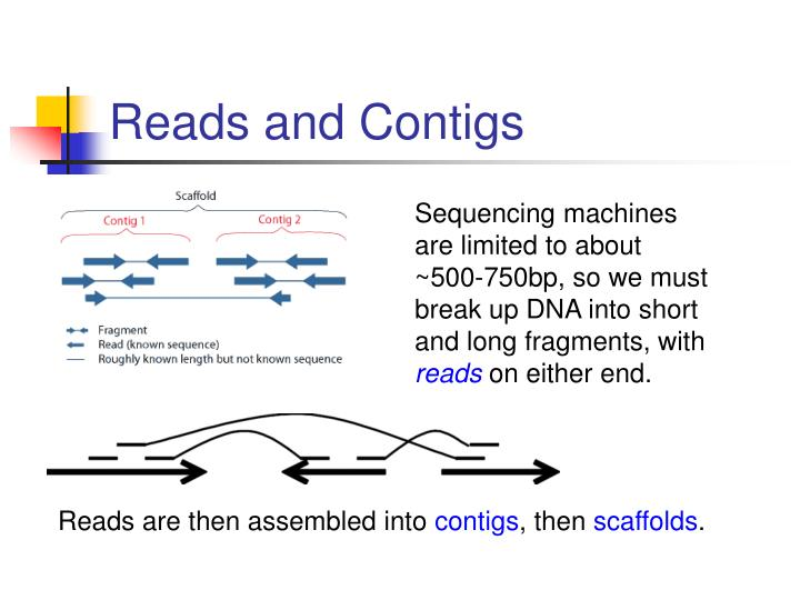 Reads and Contigs