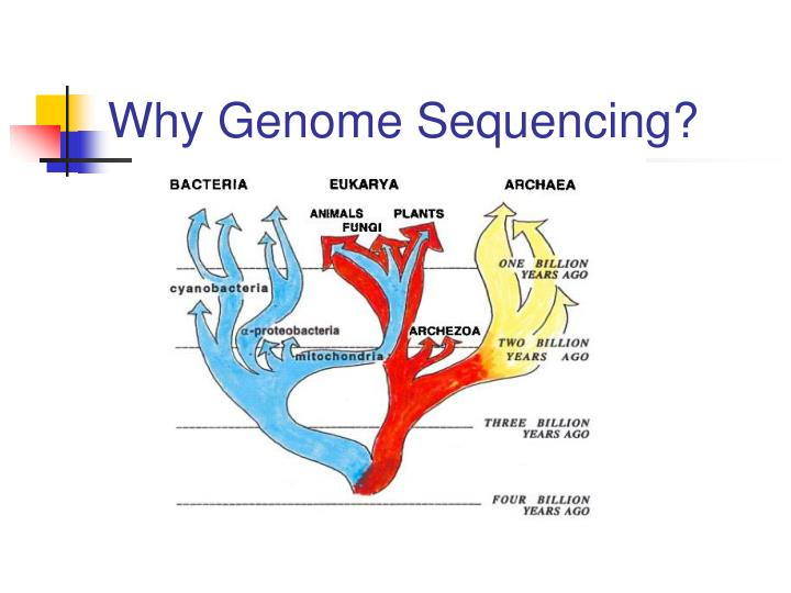 Why Genome Sequencing?