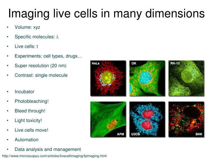 Imaging live cells in many dimensions