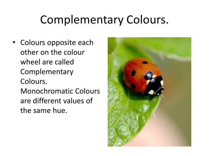Complementary Colours.