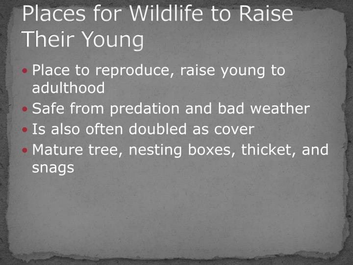 Places for Wildlife to Raise Their Young
