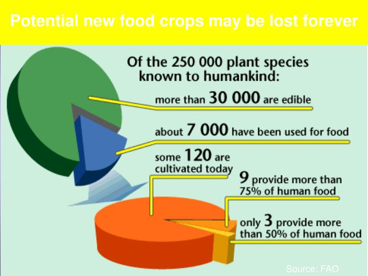 Potential new food crops may be lost forever