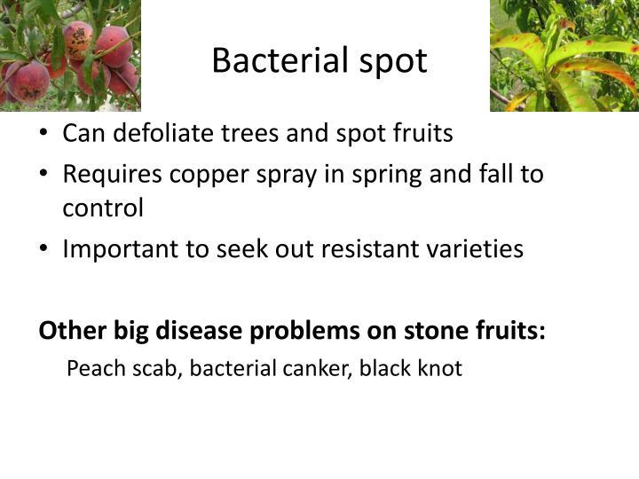 Bacterial spot