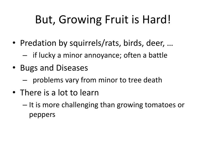 But growing f ruit is hard