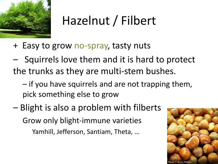 Hazelnut / Filbert