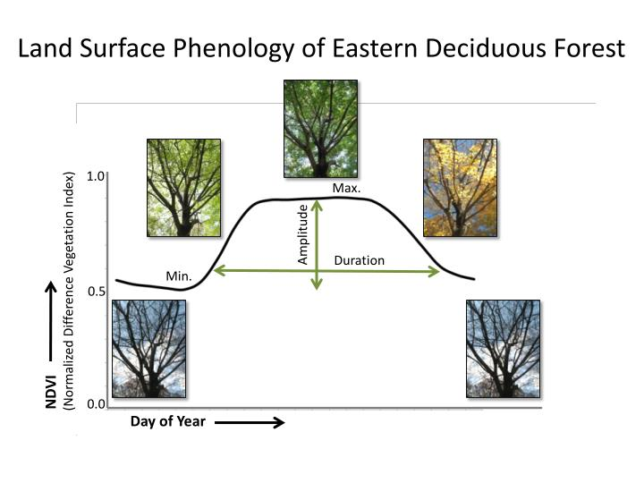 Land Surface Phenology of Eastern Deciduous Forest