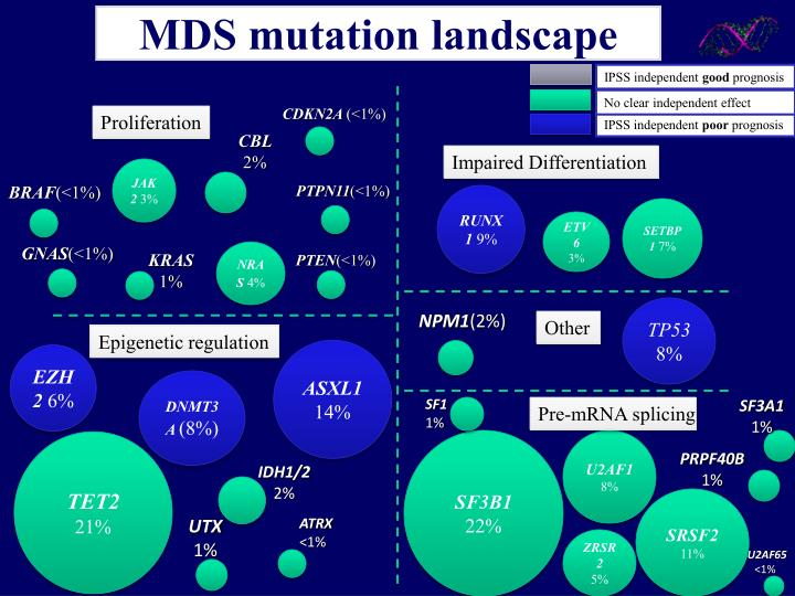 MDS mutation landscape