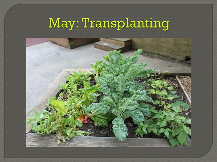 May: Transplanting