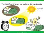 the heat from the sun can wake up dormant seeds
