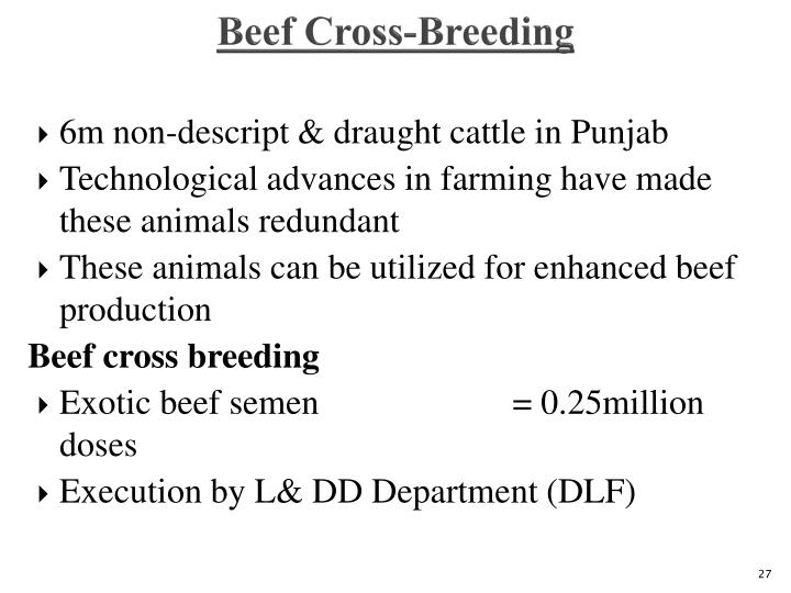 Beef Cross-Breeding