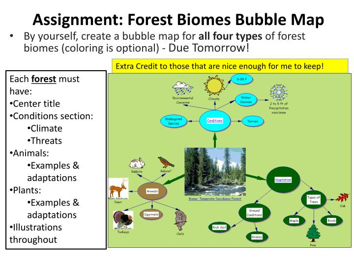 assignment forest biomes bubble map n.