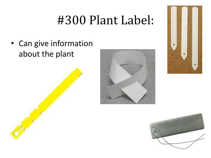 #300 Plant Label: