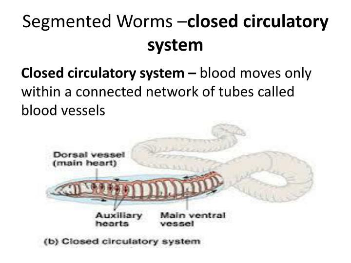 Segmented Worms –