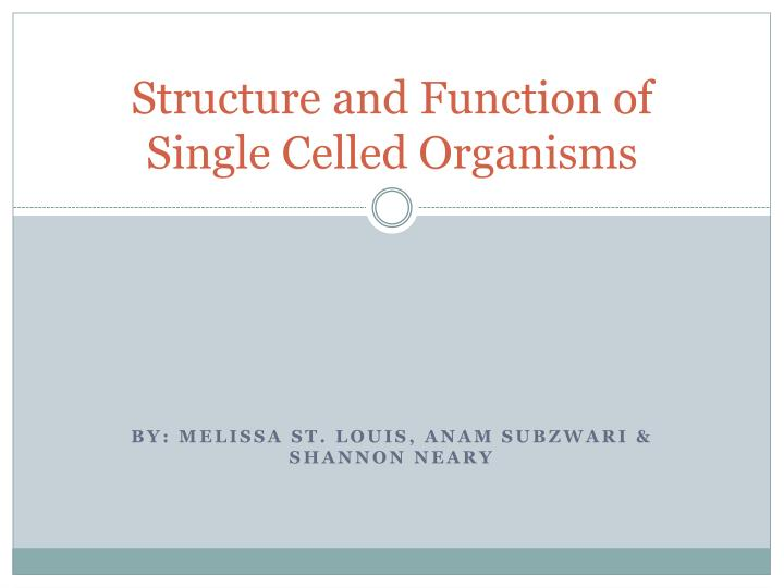 structure and function of single celled organisms n.