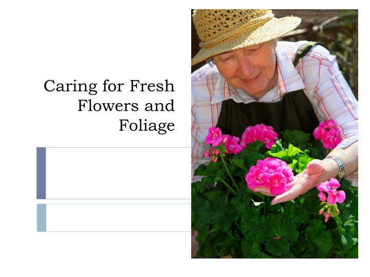 caring for fresh flowers and foliage n.