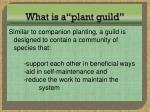 what is a plant guild