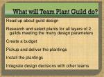 what will team plant guild do