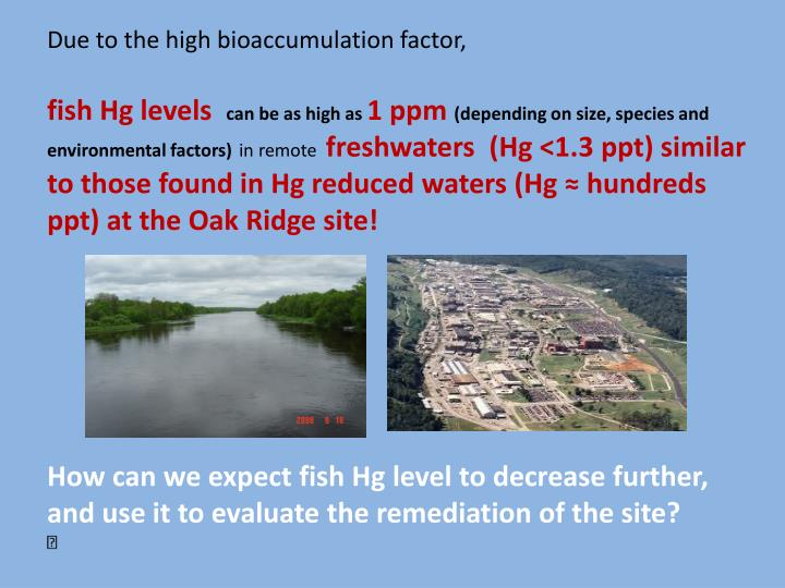 Due to the high bioaccumulation factor,