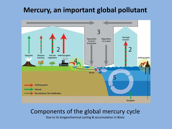 Mercury, an important global pollutant