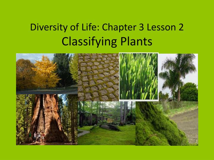 diversity of life chapter 3 lesson 2 classifying plants n.