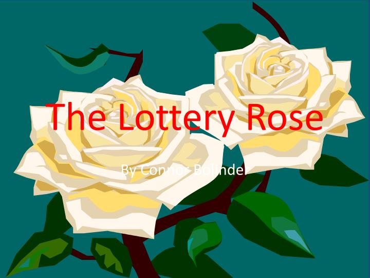 the lottery rose n.