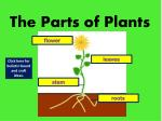 the parts of plants