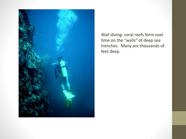 "Wall diving- coral reefs form over time on the ""walls"" of deep sea trenches.  Many are thousands of feet deep."