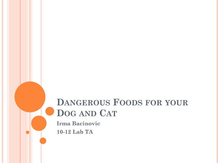 dangerous foods for your dog and cat n.