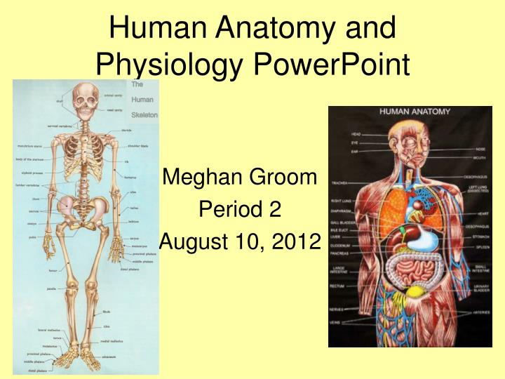 human anatomy and physiology powerpoint n.