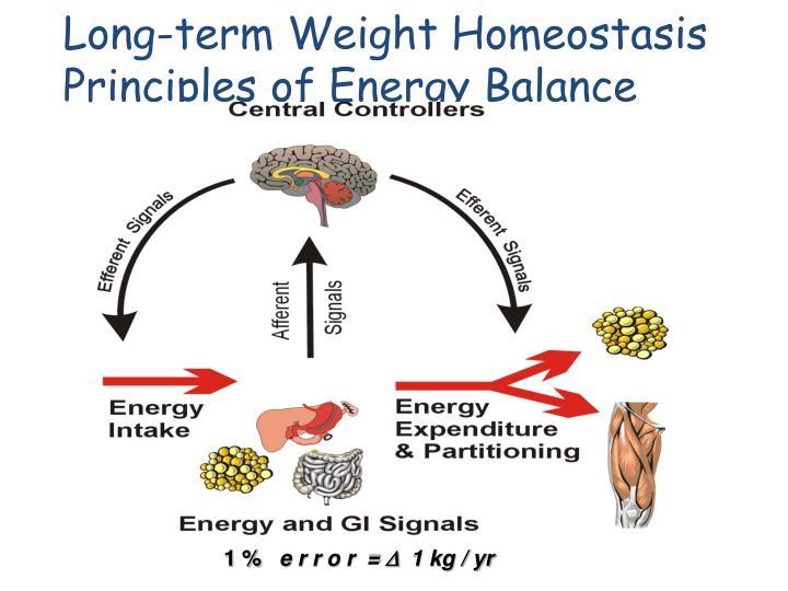 Long-term Weight Homeostasis Principles of Energy Balance