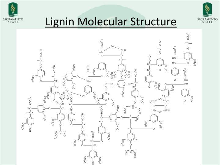 Lignin Molecular Structure