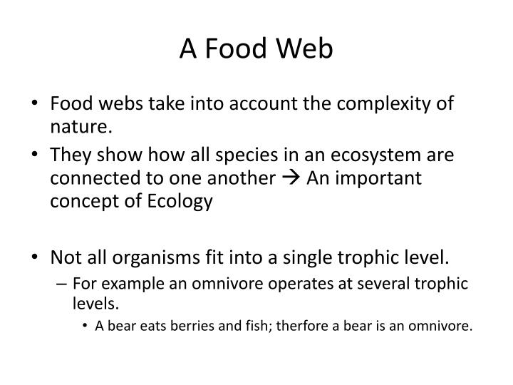A Food Web