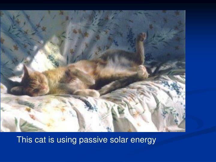 This cat is using passive solar energy