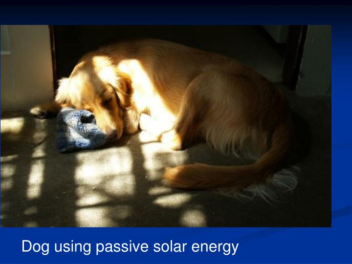 Dog using passive solar energy
