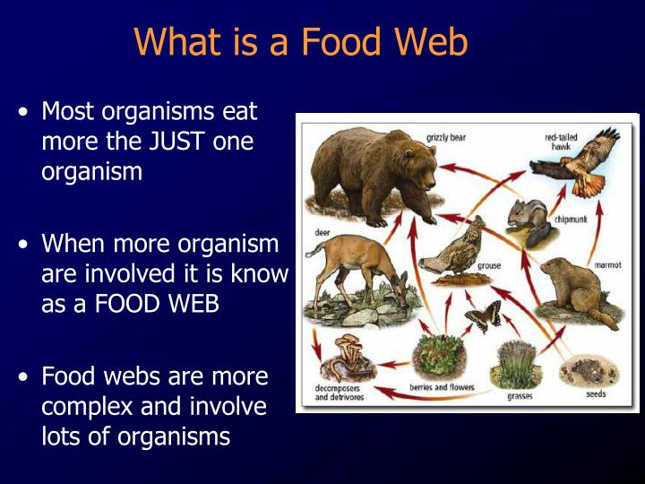 Which Organism In A Food Web Has The Most Energy